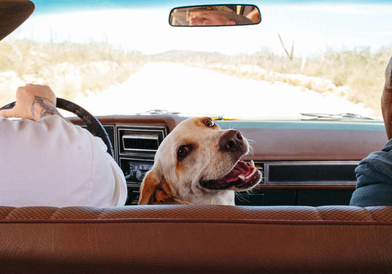 Canile Arbus , dog hotel Arbus , dog hotel Sardegna , spiagge per cani in Sardegna, pensione per cani in Sardegna